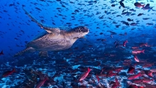 The preservation of Galapagos Island