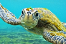 Galapagos conditions for marine animals